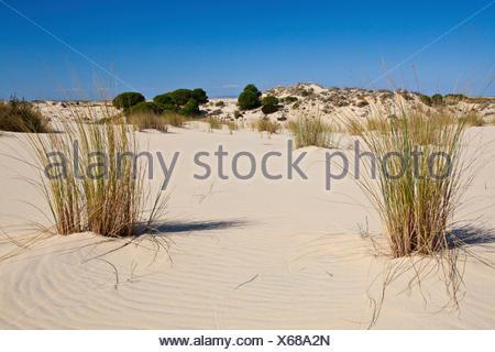 Dunes dans le parc national, l'Espagne, Andalousie, Coto de Donana National Park Banque D'Images