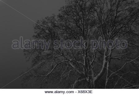 Arbre ciel monochrome gris contre Banque D'Images