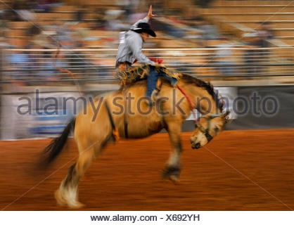 Amérique du Nord, Etats-Unis, Floride, Kissimmee, Cowboy équitation un cheval sauvage à un rodéo d'auditoire montres.