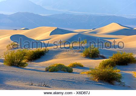 Télévision Mesquite Sand Dunes, Death Valley National Park, California, USA / lumière du matin