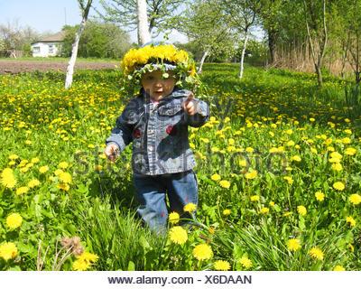 Fleur, plante, jeans, pantalons, pantalon jean, printemps, pissenlit, kid, gerbe, Banque D'Images