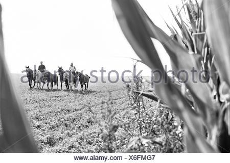 B&W image de l'homme et la femme d'équitation et des six chevaux dans le champ