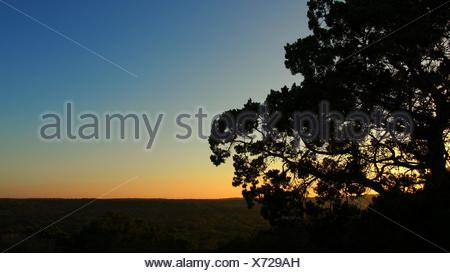 Silhouette d'arbre isolé et de l'Horizon contre Sunset Sky Banque D'Images