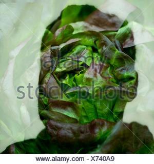 Double exposition de droit de l'homme et des plantes Silhouette Banque D'Images