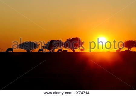 Arbres Silhouette et paysage spectaculaire contre un ciel clair au lever du soleil Banque D'Images