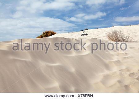 Dunes de sable, paysage de dunes, Risco del Paso, Fuerteventura, Îles Canaries, Espagne Banque D'Images
