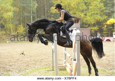 Adolescente, cheval, équitation, warmblood bavarois, side view, sauter, Banque D'Images