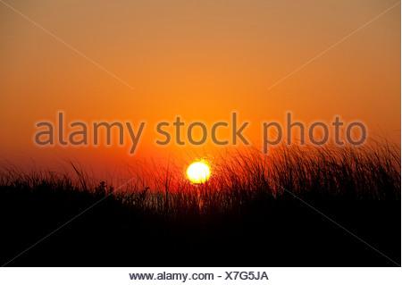 Sunrise côtières, Cape Cod, MA, USA Banque D'Images
