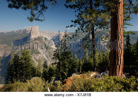 Usa Californie Vue de Glacier Point et Half Dome vallée de Yosemite Yosemite National Park Nature Paysage Forêt de conifères Banque D'Images