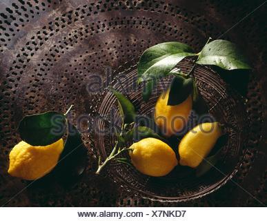 Les citrons de Menton