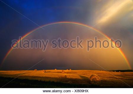 Agriculture - un arc-en-ciel et nuages de tempête au-dessus d'un champ de blé ronde bottes de paille / près de Cypress River, Manitoba, Canada.