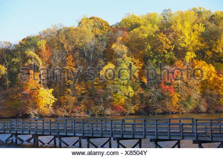 Knoxville, Tennessee, United States of America; des arbres le long du rivage et un pont en bois Banque D'Images