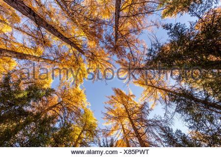 Entouré par les arbres d'automne,Cortina d'Ampezzo, Belluno district,Veneto,Italie,Europe Banque D'Images
