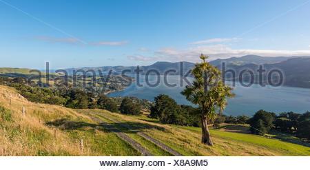 Paysage côtier, le port d'Otago, Otago, île du Sud, Nouvelle-Zélande