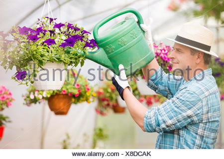 Vue latérale du middle-aged man watering plants in greenhouse fleurs Banque D'Images