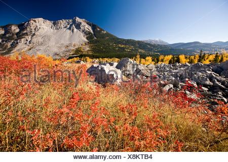 L'automne à Frank Slide dans Crowsnest Pass, Alberta, Canada