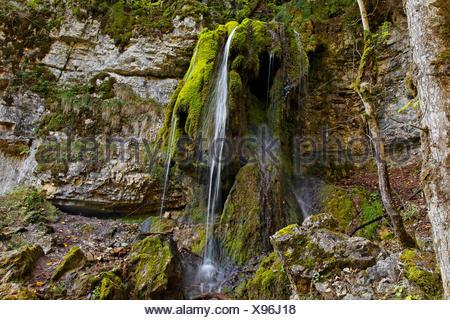 Petite cascade sur calc-dépôts de frittage, gorge Wutachschlucht, près de l'ancien Bad Boll, Bonndorf, Bade-Wurtemberg Banque D'Images