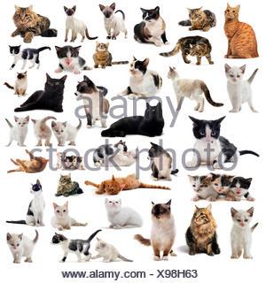 Chat Chats chaton bébé chat chat domestique groupe pussycat belle beauteously pet animal nice jetblack basané noir deep black Banque D'Images