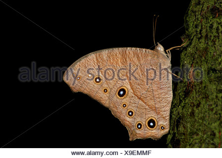 Butterfly reste on tree Banque D'Images