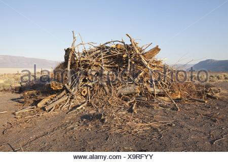 Nevada USA tas de débris et copeaux de bois Banque D'Images