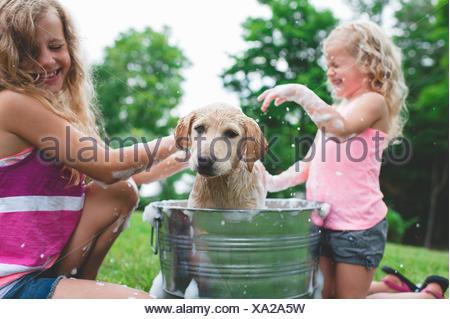 Labrador Retriever chiot dans l'eau bain vibrant godet à soeurs Banque D'Images