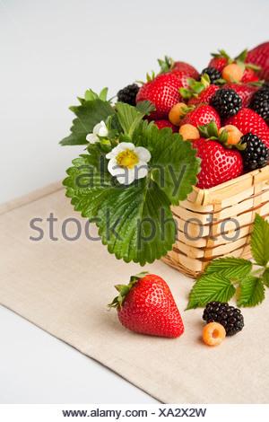 Agriculture - petits fruits mélangés dans un panier avec des feuilles et une fleur d'or; fraises, framboises et mûres. Banque D'Images