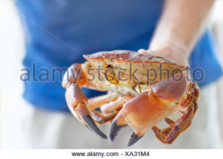 Close-up of hand holding crab Banque D'Images