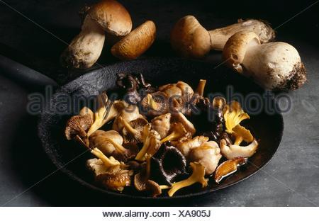 Fricasse de champignons