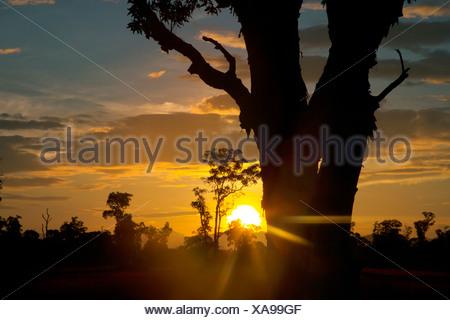 Silhouettes sunrise arbres dans la savane, l'écosystème unique de la Thaïlande, Koh Phra Thong Banque D'Images