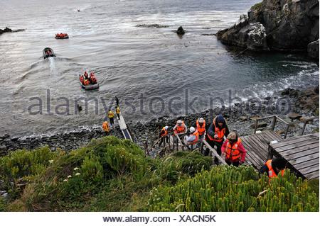 Les passagers du bateau de croisière Stella Australis Cruceros Australis compagny atterrissage sur l'île Horn, Terre de Feu, Chili, Banque D'Images
