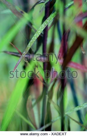 Gouttes d'eau sur des brins d'herbe