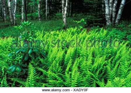 Forêt au printemps, Kingston, New Brunswick, Canada