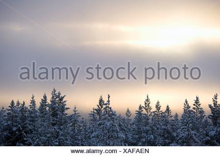 Vue de la forêt au crépuscule d'hiver Banque D'Images