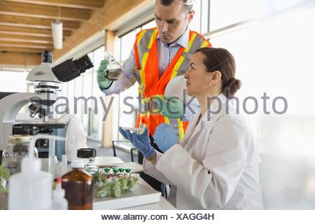 L'analyse des techniciens de laboratoire des échantillons de sol dans Banque D'Images