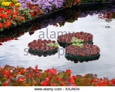 Tatton Flower Show avec houseleeks plantation Conseil dans des conteneurs flottants