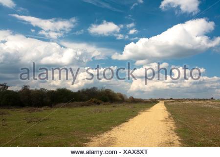 Le ressort de Greenham Common, près de Newbury, Berkshire, Royaume-Uni Banque D'Images