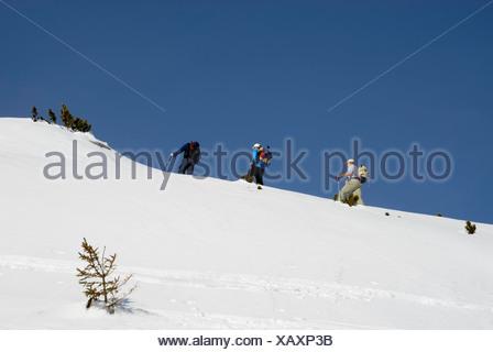 Les alpinistes sur les skis l'ascension d'une crête couverte de neige de la région en haute montagne, Rofan, Tyrol, Autriche, Europe Banque D'Images
