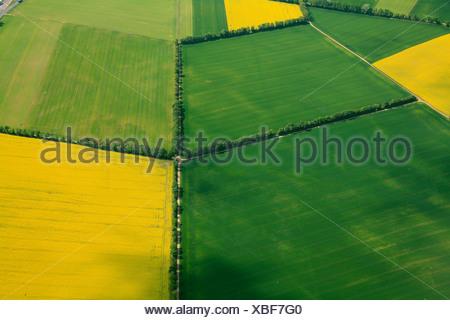 Vue aérienne, des champs de céréales et de canola champs séparés par des haies, Erbes-Buedesheim, Rhénanie-Palatinat, Allemagne, Europe Banque D'Images