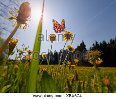 CONCEPT DE L'ENVIRONNEMENT: Printemps Meadow (Allemagne/Bavière) Banque D'Images