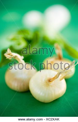 Différents types d'oignons sur fond vert FoodCollection Banque D'Images