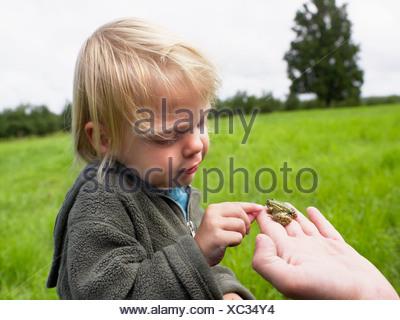 Jeune fille de toucher une petite grenouille qui s'est tenue à une main d'homme. Banque D'Images