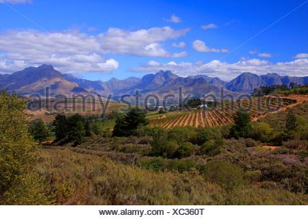 Vale de Devon, région de Stellenbosch, Province de Western Cape, Afrique du Sud Banque D'Images