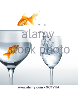 Jumping goldfish artwork Banque D'Images