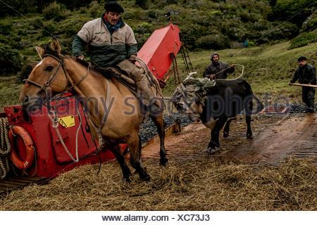 Bagualeros, cowboys qui capture l'élevage sauvages, charger un ferry qui les ramènera à Puerto Natales. Banque D'Images