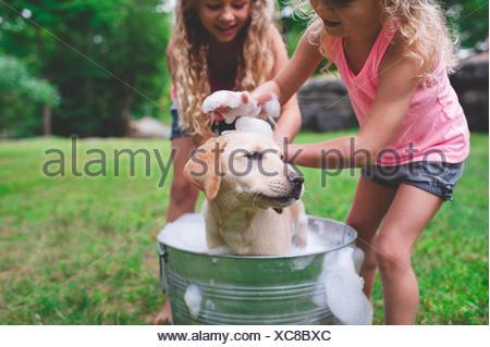 Deux sœurs echelle animal Labrador Retriever chiot Banque D'Images