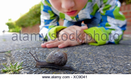Escargot, brown, gardensnail escargot commun, l'escargot (Helix aspersa, Cornu aspersum, Cryptomphalus aspersus), petit garçon regardant un escargot sur un trottoir, Pays-Bas Banque D'Images