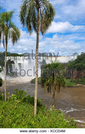 Iguazu Falls,Argentine Banque D'Images