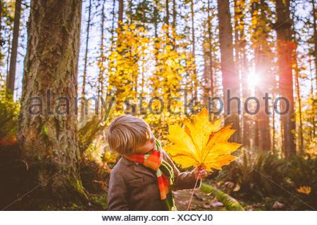 Boy holding large feuille jaune dans les bois Banque D'Images