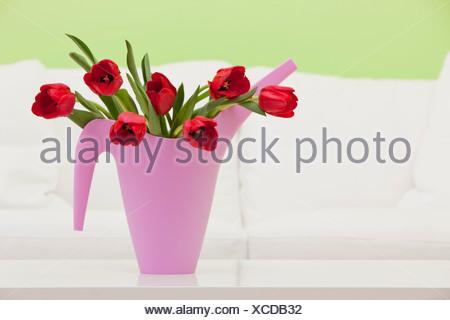 Bouquet de tulipes rouges en pot d'arrosage en plastique, studio shot
