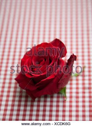 Rose rouge sur vérifier cirée Banque D'Images
